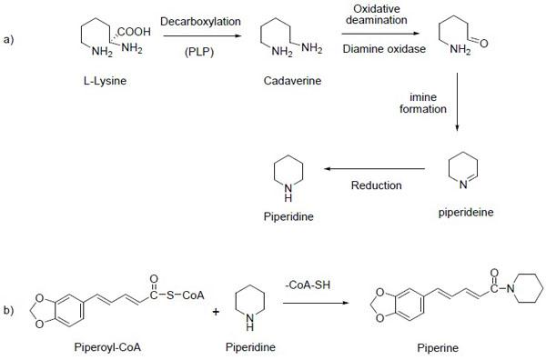 heterocyclic in journal sythesis