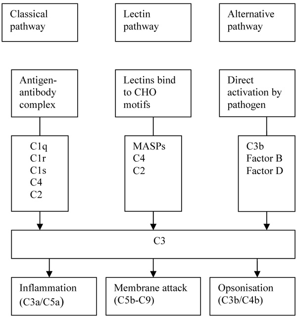 Association Of Mannose-Binding Lectin Gene Polymorphisms