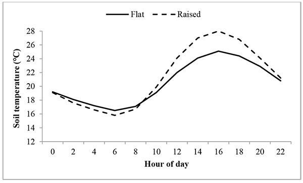 temperature effects on radish root development essay Interesting radish facts: radish plant can reach 6 feet in height and 3 feet in width size of the root depends on the variety rounded varieties are usually 1 inch wide, cylindrical types are 7 inches long, while carrot-like varieties grow to the size of 24 inches.