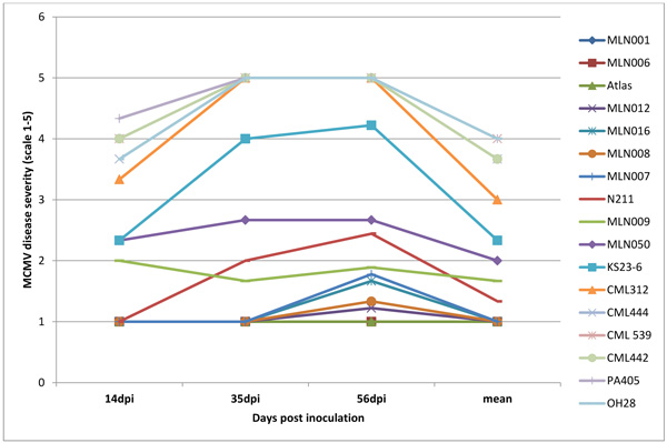 Response of Selected Maize Inbred Germplasm to Maize Lethal