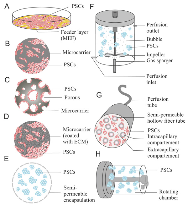 Physiological Microenvironmental Conditions in Different Scalable