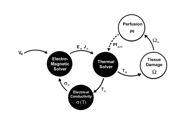 considerations for thermal injury analysis for rf ablation devices