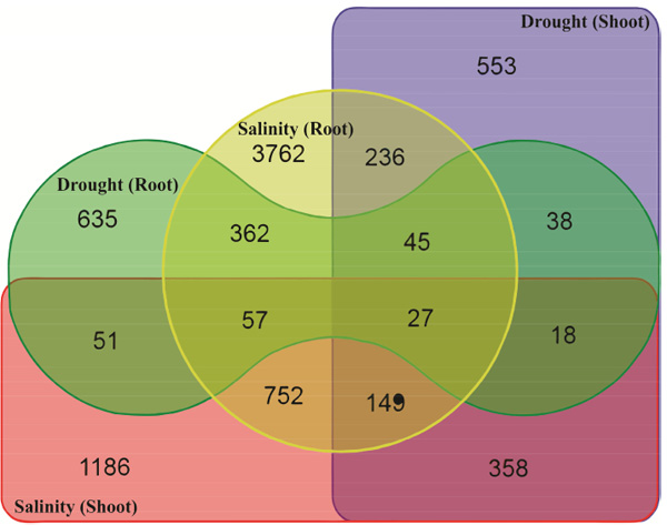 Investigation Of Drought And Salinity Tolerance Related Genes And