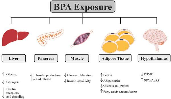 Resultado de imagen de bisphenol A