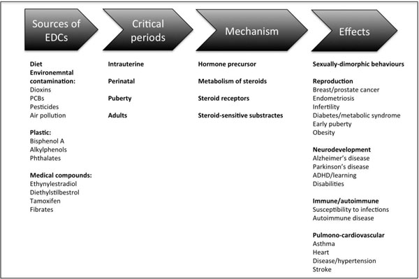 amoxicillin dosage for children by weight chart