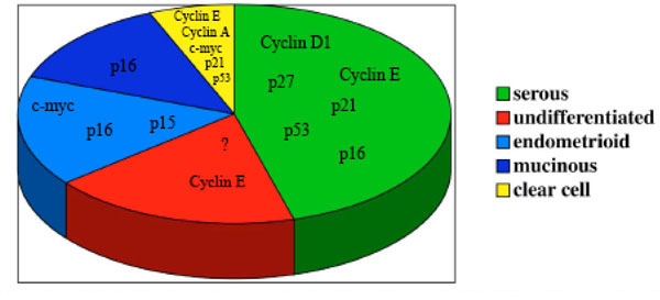 the role of cyclin e in ovarian cancer Ending a dry spell of years without treatment for ovarian cancer of the role of brca mutations as a tumors that overexpress cyclin e tend to be.