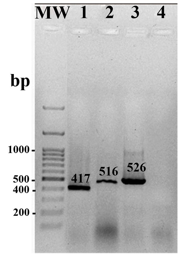 Salmonella Resistance To Ciprofloxacin