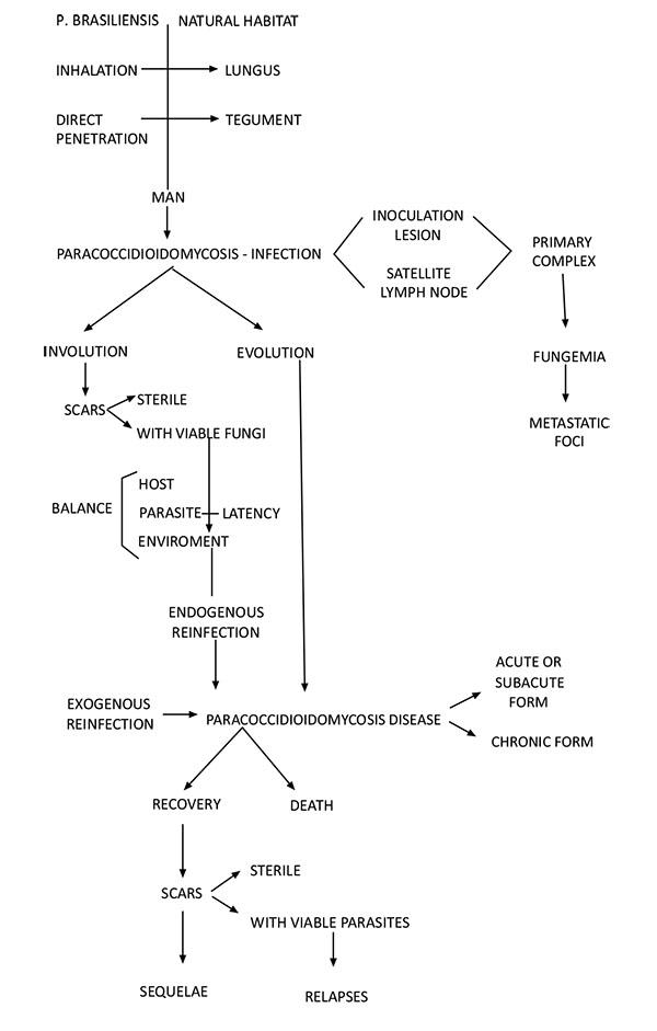 cause della gamma gt alta