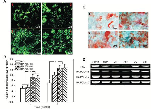 Nanohydroxyapatite Effect on the Degradation